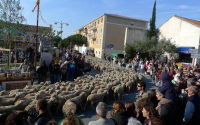 Desfile de la trashumancia en Jonquières
